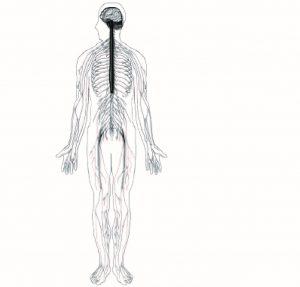 verschillende lichaams figuren