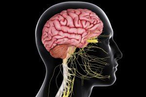 neurologische systeem